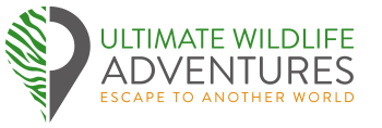 Ultimate Wildlife Adventures