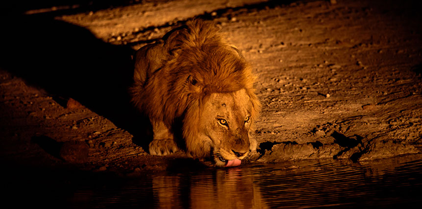 Africa Night Safari - Ultimate Wildlife Adventures