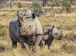 Black Rhino Safari Content 1 - Ultimate Wildlife Adventures