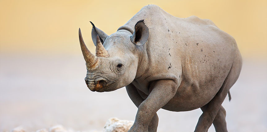 Black Rhino Safari - Ultimate Wildlife Adventures