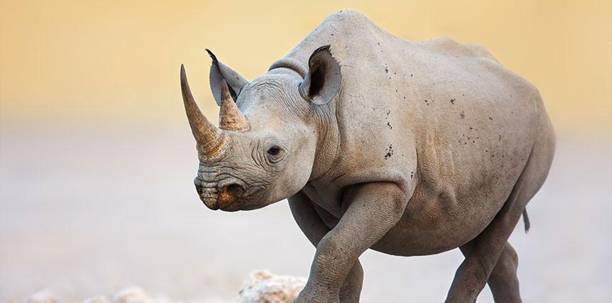 Black Rhino Safari - Ultimate Wildlife Adventures