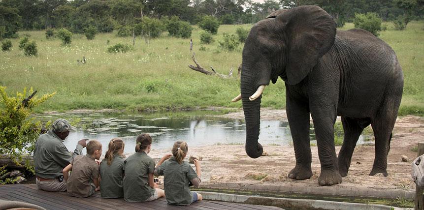 Family Safari Holidays - Ultimate Wildlife Adventures