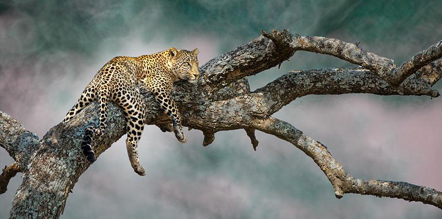 Group Safari - Ultimate Wildlife Adventures