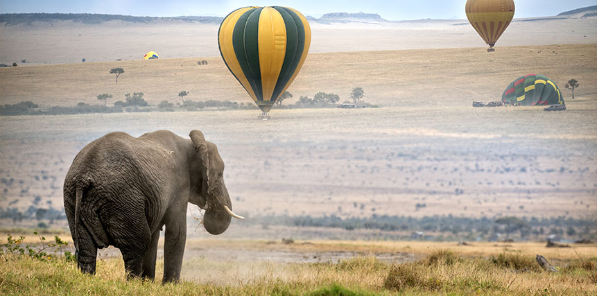 Hot Air Balloon Safari - Ultimate Wildlife Adventures