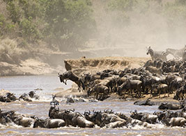 Kenya Safari Content 1 - Ultimate Wildlife Adventures