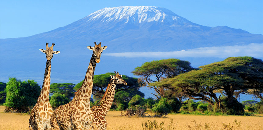 Kenya Safari Holidays - Ultimate Wildlife Adventures