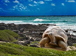 Mauritius Content 1 - Ultimate Wildlife Adventures
