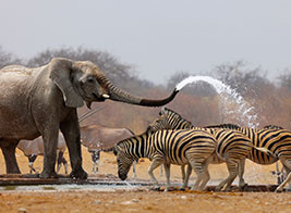 Namibia Safari Content 1 - Ultimate Wildlife Adventures