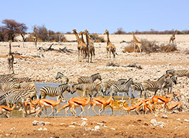 Namibia Safari Content 3 - Ultimate Wildlife Adventures