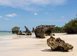 Pemba Island Content 2 - Ultimate Wildlife Adventures
