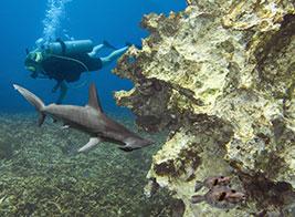 Pemba Island Content 3 - Ultimate Wildlife Adventures