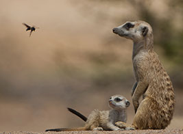 South Africa Safari Content 3 - Ultimate Wildlife Adventures