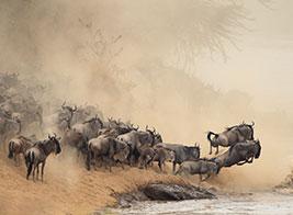 Tanzania Safari Content 2 - Ultimate Wildlife Adventures