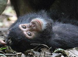 Tanzania Safari Content 3 - Ultimate Wildlife Adventures