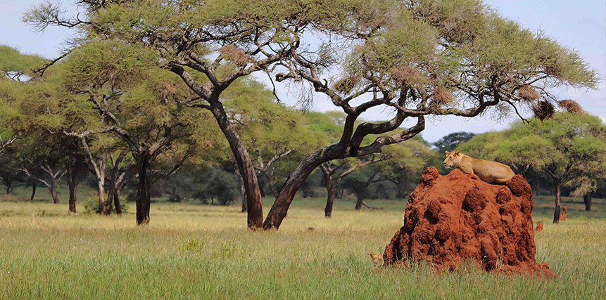 Tanzania Safari Holidays - Ultimate Wildlife Adventures