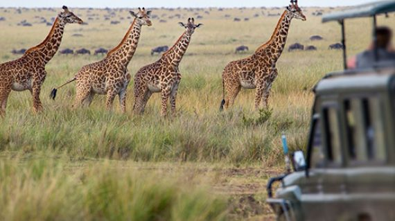 tanzania-zanzibar-luxury-honeymoon-itinerary