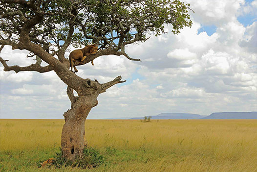 Tanzania & Zanzibar Luxury Honeymoon, Serengeti National Park - Ultimate Wildlife Adventures