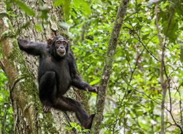 Uganda Safari Content 1 - Ultimate Wildlife Adventures