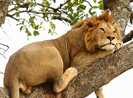 Uganda Safari Content 2 - Ultimate Wildlife Adventures