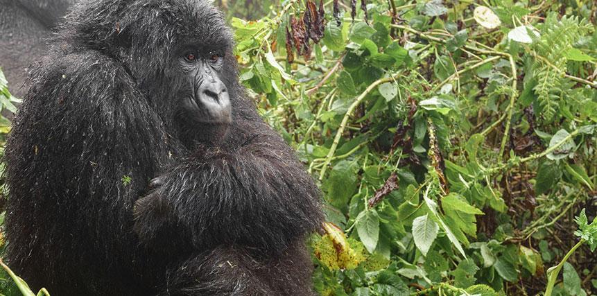 Uganda Safari Holidays - Ultimate Wildlife Adventures