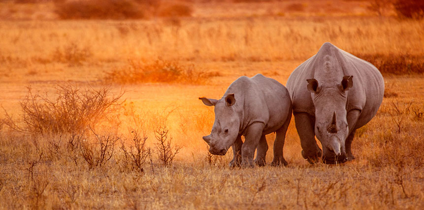 White Rhino Safari - Ultimate Wildlife Adventures