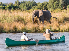 Zambia Safari Content 3 - Ultimate Wildlife Adventures