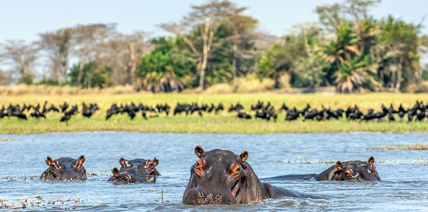 Zambia Safari Holidays - Ultimate Wildlife Adventures
