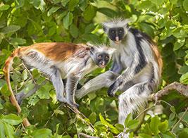 Zanzibar Safari Content 2 - Ultimate Wildlife Adventures
