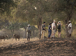 Zimbabwe Safari Content 2 - Ultimate Wildlife Adventures
