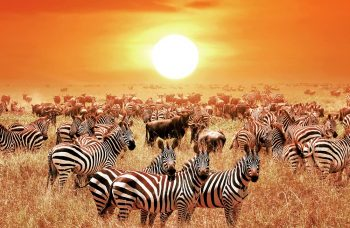 the-wildebeest-migration