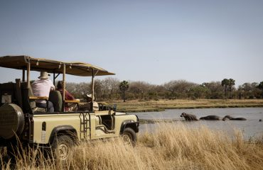 Hippopotamus are a real feature of every game drive in Katavi National Park.