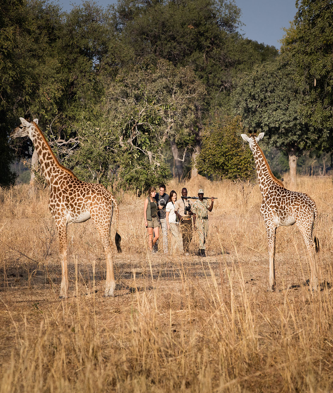Chikoko Trails, Zambia: Ultimate Wildlife Adventures