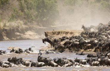 The greatest show on earth, the Mara River crossings. Late July through September offers you the best chance of seeing this spectacular event unfold.