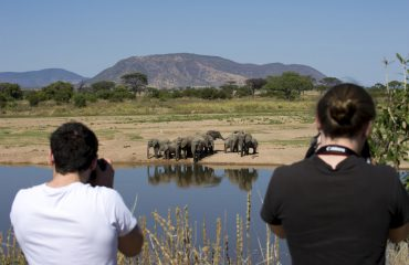 Ruaha is an exceptional walking destination. Get out of your vehicle and interact with wildlife on their level.
