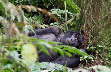 Your mountain gorilla trekking experience will be completely unique.