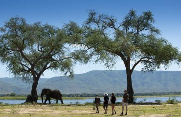 Walking at Mana Pools often involves approaches on large game.