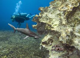 Diving with sharks on Zanzibar: Ultimate Wildlife Adventures
