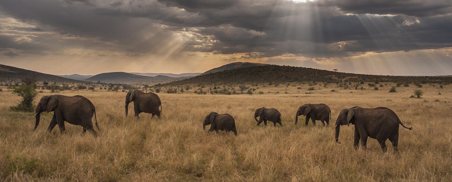 Family of Elephants Slide - Ultimate Wildlife Adventures