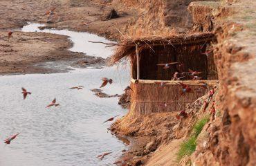 Tafika Camp hide