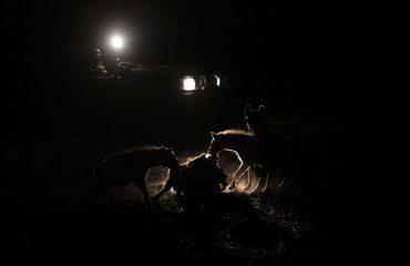Tafika Camp night drive