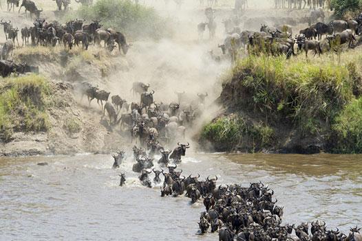 Tanzania & Zanzibar Luxury Honeymoon, Serengeti National Park 4 - Ultimate Wildlife Adventures