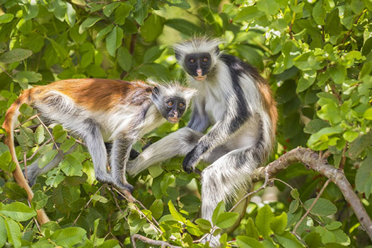 Tanzania & Zanzibar Luxury Honeymoon Overview 3 - Ultimate Wildlife Adventures