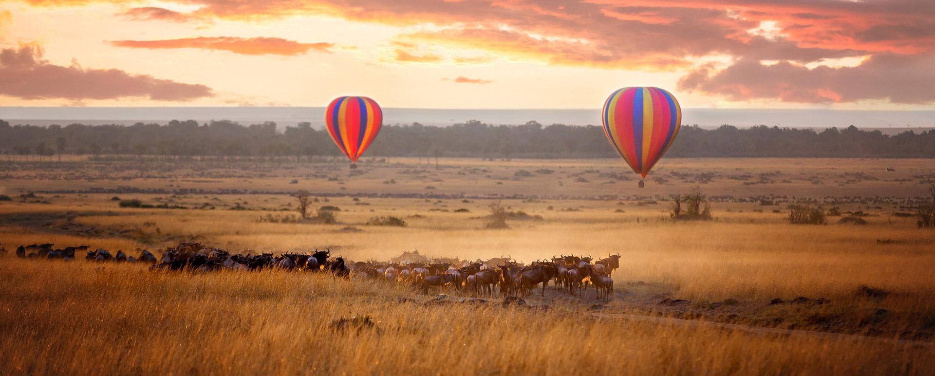 Hot Air Balloon Slide - Ultimate Wildlife Adventures