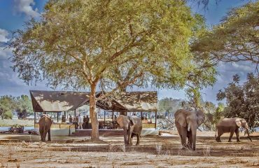 Elephants are frequent visitors to Old Mondoro Camp, to the delight of staff and visitors.