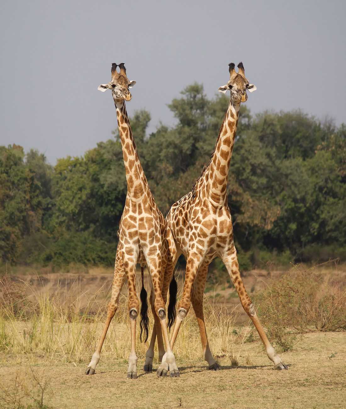 Zambia honeymoon safari- Ultimate Wildlife Adventures