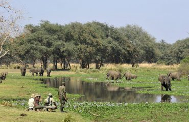 Walking safari is quite an experience along the Zambezi