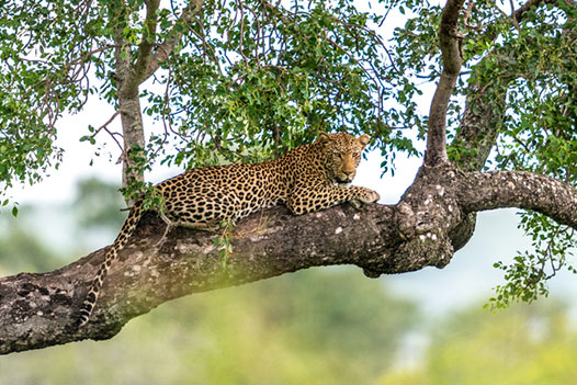 Luangwa Zambezi Explorer, Lower Zambezi National Park 2 - Ultimate Wildlife Adventures