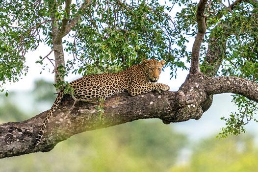 Luangwa Zambezi Explorer, Lower Zambezi National Park 2 - Ultimate Wildlife Adventures