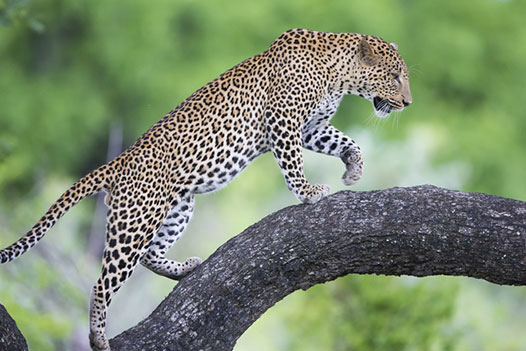 Luangwa Zambezi Explorer, South Luangwa National Park 2 - Ultimate Wildlife Adventures
