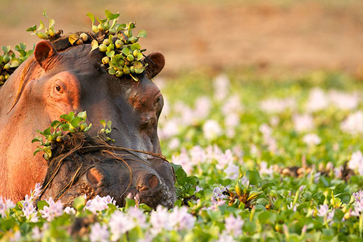 Luangwa Zambezi Explorer, South Luangwa National Park 3 - Ultimate Wildlife Adventures